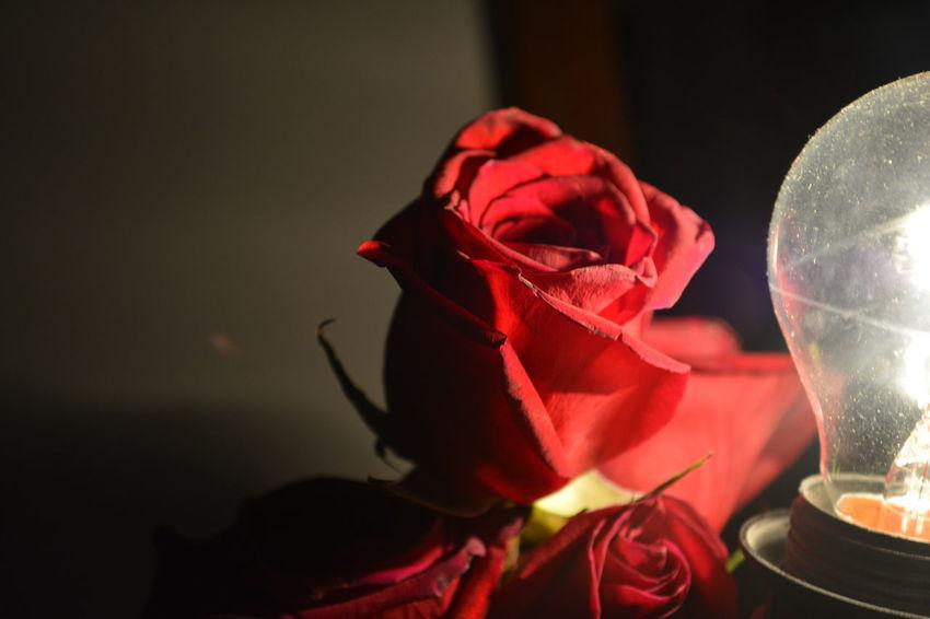 EyeEm Nature Lover EyeEm Gallery EyeEmBestPics EyeEmNewHere Relaxing Rosas Rosas Bonitas❤️🌹 Rosas🌹 Rose Petals Rose Collection Rose Hip Roses Are Red Rose♥ Rosa Rosas <3 Rosas Rojas Rosasrojas Rosas🌹🌹 Rose - Flower Rose Flower Rose Garden Roses Roses🌹 Rose🌹 Rosé