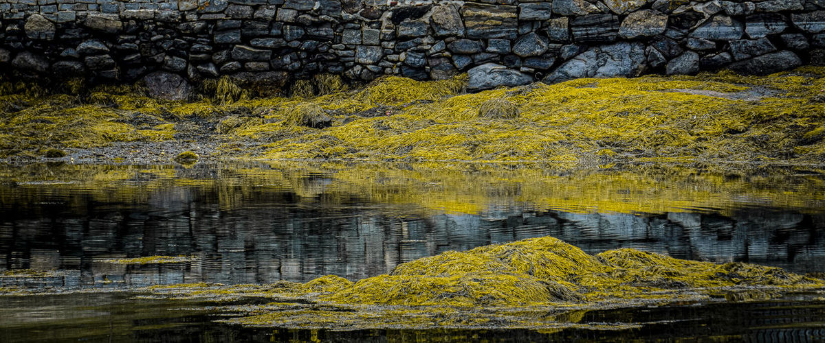 Yellow flowers growing on rock by lake