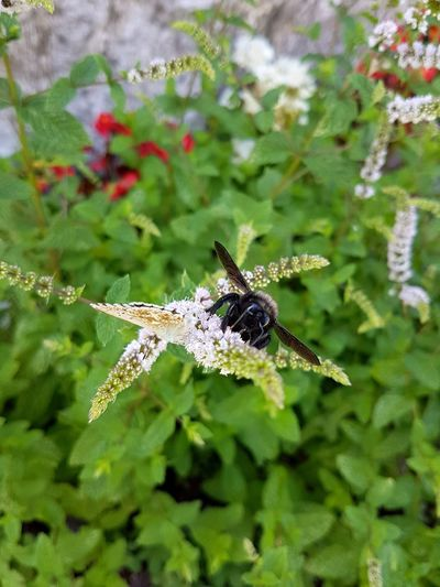 Insect Animals In The Wild Animal Themes Animal Wildlife Nature No People Day Close-up Green Color Leaf Outdoors Plant Full Length Butterfly Blooming Flower Nature Insects On Flower Head Insects  Mountain Garden Freshness Growth