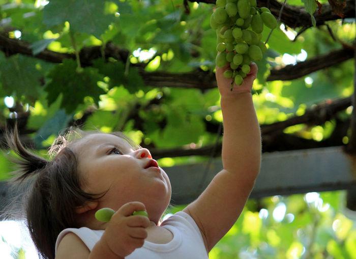 Cute girl picking green fruits in garden