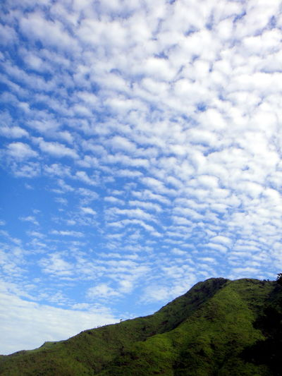 EyeEmNewHere A New Beginning Clouds And Sky Cloud - Sky Mountain Tree Blue Pinaceae Tree Area Pine Tree Forest Sky Landscape Cloud - Sky Treetop Cumulus Cloud Cloudscape Mountain Range Majestic Fluffy Mountain Dramatic Sky Cumulonimbus