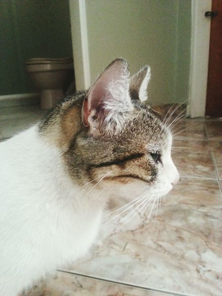 Desde el perfil de un gata Cat Lovers Sweet♡ Miau *-*  Protect Animals ?