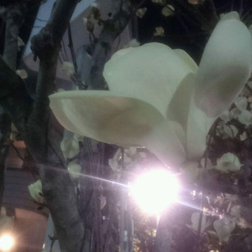 暗闇咲く花