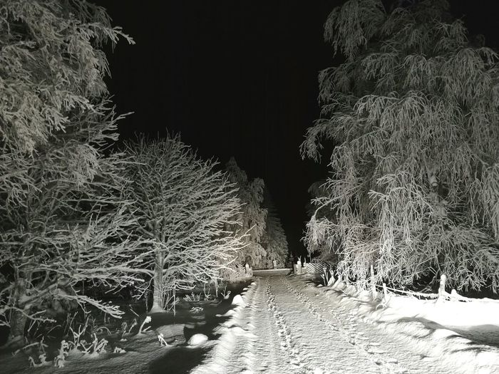 No sunlight in the morning, but a lot of snow. Tree Nature Outdoors Beauty In Nature No People Snow Winter Homestreet