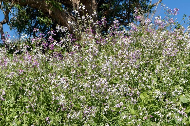 purple wildflowers against blue sky Flower Flowering Plant Plant Beauty In Nature Tree Growth Freshness Day Nature Fragility Vulnerability  No People Outdoors Blossom Tranquility Botany Land Pink Color Abundance Green Color Springtime Purple Wild Flowers Wildflower