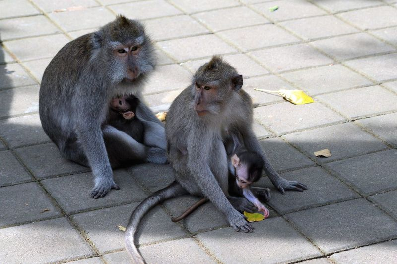 High angle view of monkeys sitting outdoors