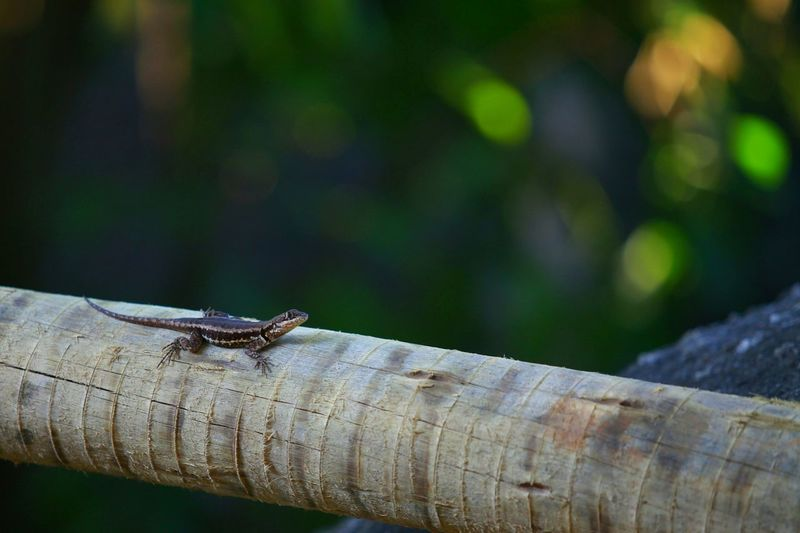 Lizard EyeEm Nature Lover Nature_collection Photography 70-200mm Check This Out Reptile
