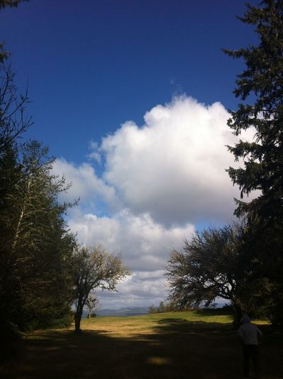 Beauty In Nature Blue Cloud Cloud - Sky Cloudy Day Field Grass Grassy Green Color Growth Horizon Over Land Idyllic Landscape Nature No People Non Urban Scene Non-urban Scene Outdoors Remote Scenics Sky Tranquil Scene Tranquility Tree