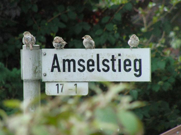 Amselstieg means in english: Blackbirdway Schleswig-Holstein Animal Themes Animal Wildlife Animals In The Wild Bird Germany Hometown Information Nature No People Outdoors Plant Plön Plöner See