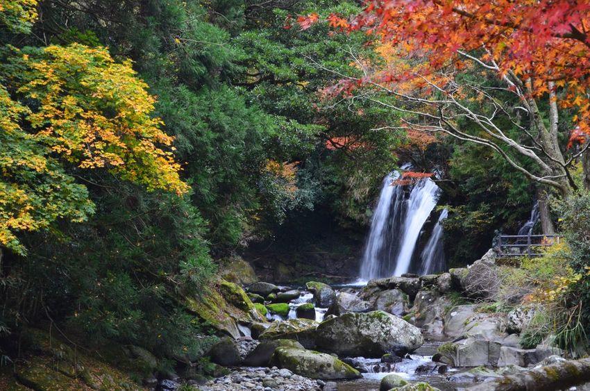Tree Waterfall Water Plant Flowing Water Scenics - Nature Long Exposure