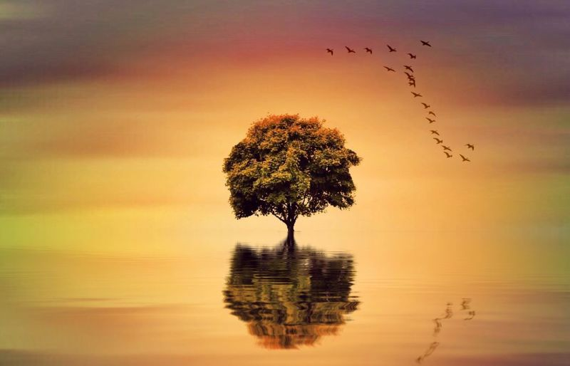 Miles Away Reflection Nature Waterfront Tranquility Sunset Beauty In Nature Scenics Tranquil Scene Water Lake Sky Tree Horizon Over Water Outdoors No People Bird Single Tree Lone Day