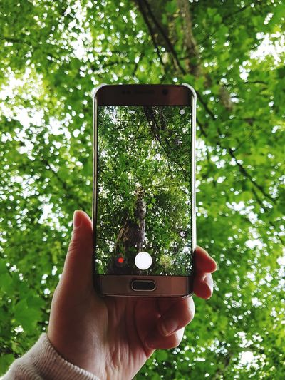 Human Hand Human Body Part Portable Information Device Wireless Technology Holding One Person Human Finger Tree Smart Phone Technology Device Screen Photographing People Mobile Phone EyeEmPremiumShot Green Color Photography Themes Day One Man Only Adults Only The Week On EyeEm