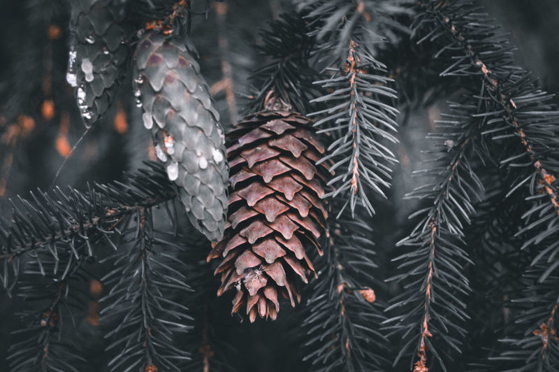 Close-up of wet leaves on tree during rainy season
