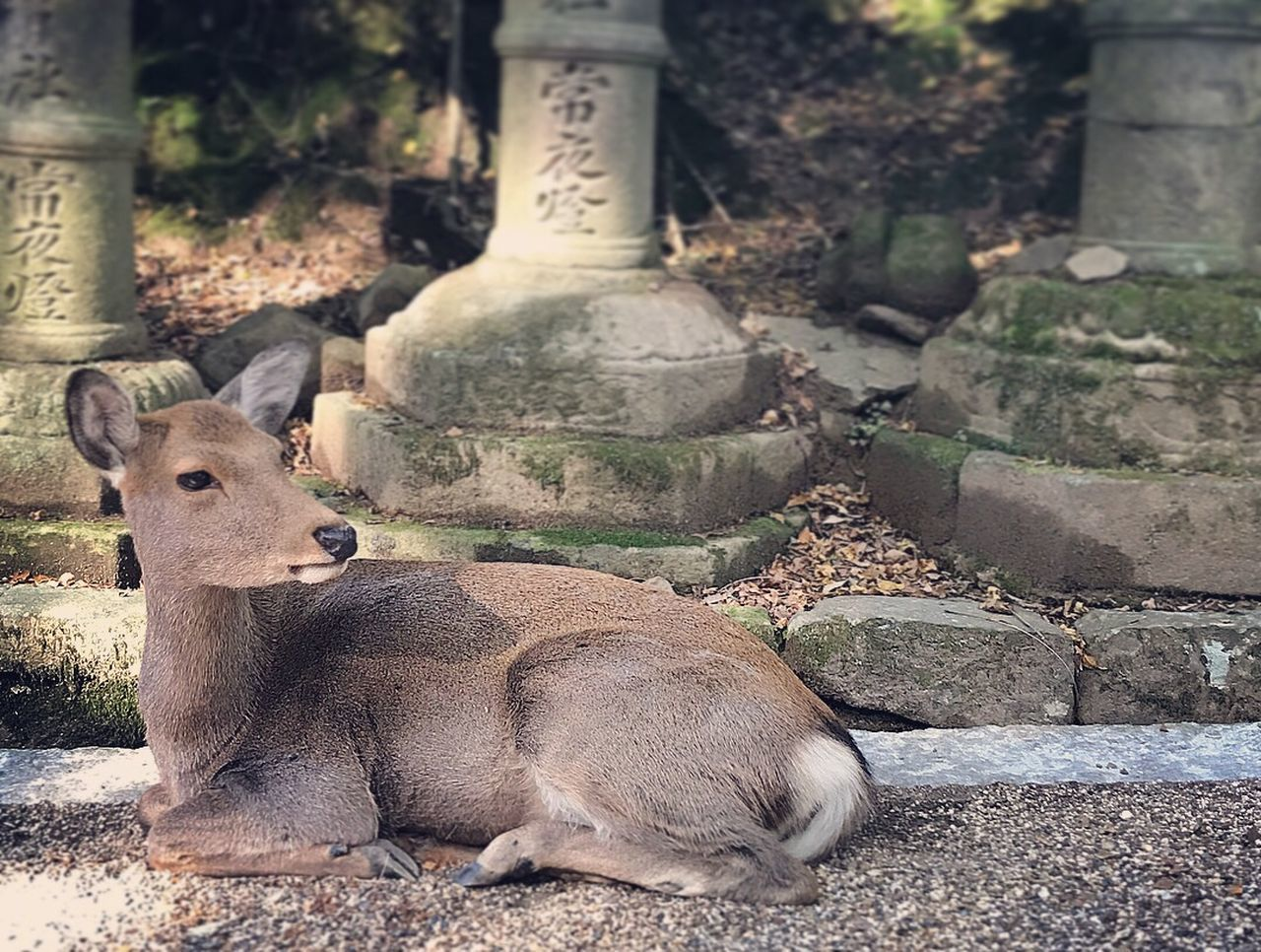 mammal, animal themes, animal, vertebrate, day, relaxation, no people, animal wildlife, one animal, animals in the wild, nature, focus on foreground, domestic animals, outdoors, solid, pets, field, deer, herbivorous