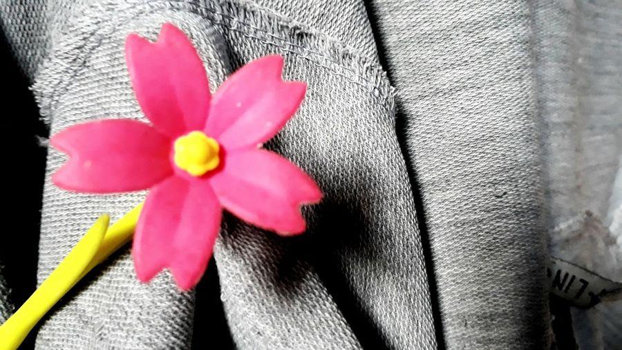 flower Hope Beauty Indoors  Flower Petal Fragility Flower Head Close-up No People Freshness