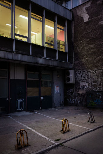 Cat on street against illuminated building at night