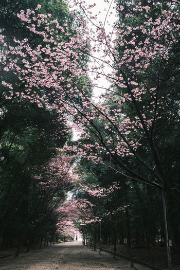 Low angle view of flowering trees in park