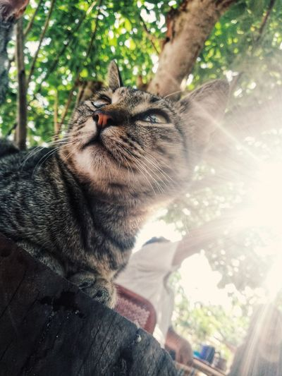 Mickey PhonePhotography Mobilegraphy Huaweiphotography Huaweinova2i Cats Of EyeEm Catgraphy Nature Animal Themes Sunlight Pets Tree Feline Domestic Cat Close-up Whisker Cat Yellow Eyes At Home Domestic Animals Animal Face