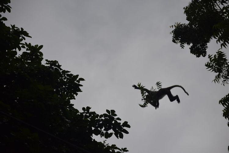 Monkey flying