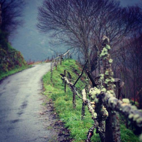 Bouso ño Asturias