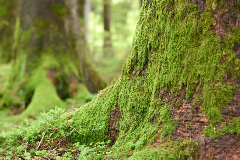 Close-up of moss covered tree trunk