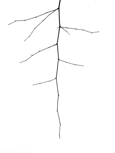 Low angle view of silhouette plant against white background