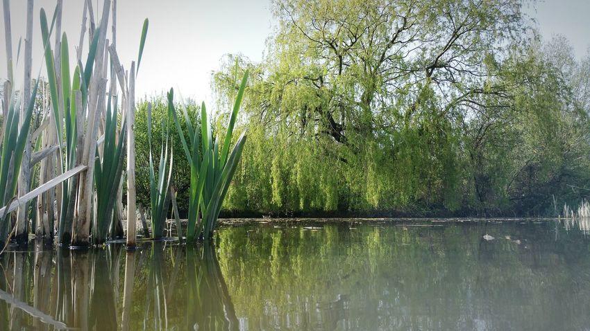 Pond Waterline My Favorite Fishing Spot Reeds Water