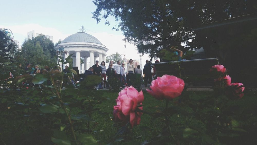 Taking Photos Check This Out Hello World Flowers Pink Rose Roses Walking At The Park EyeEm Best Shots Popular Photos