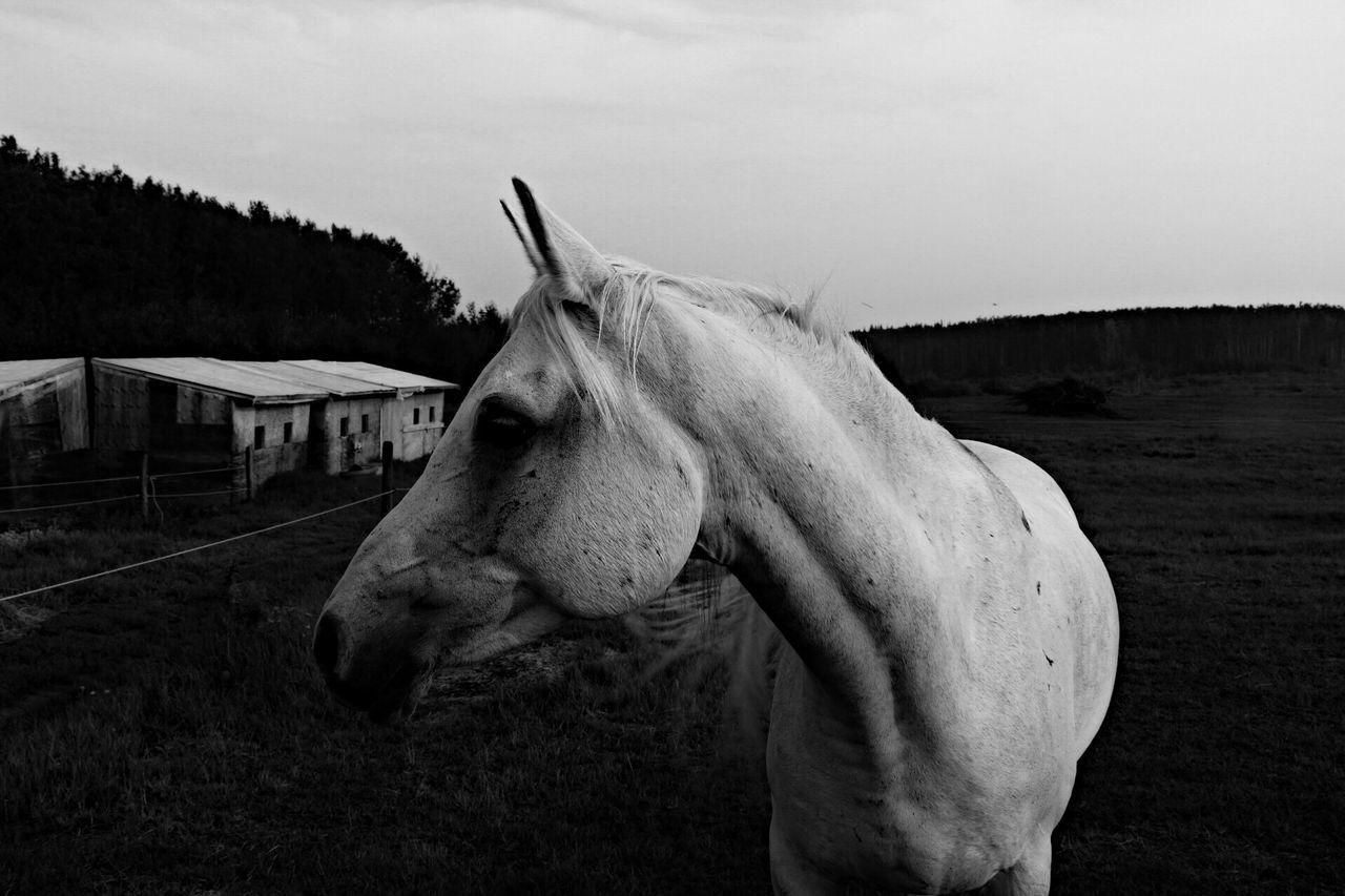 mammal, one animal, horse, domestic animals, livestock
