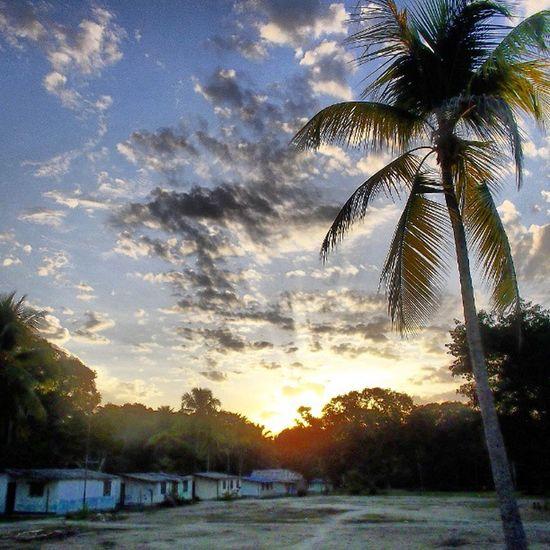 Amazonas Amanecer . Naturaleza (: