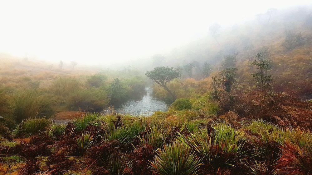 Grassland Mist Tree Water Sky Grass Foggy