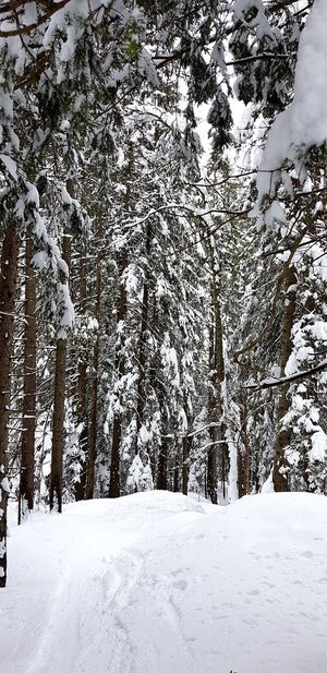 Forest No People Nature_collection Nature Landscape Tree Snow Cold Temperature Winter Snowing Frozen Sky Deep Snow Powder Snow Ski Track