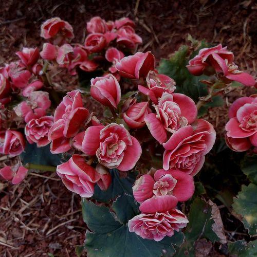 ❤ Flowers Nature