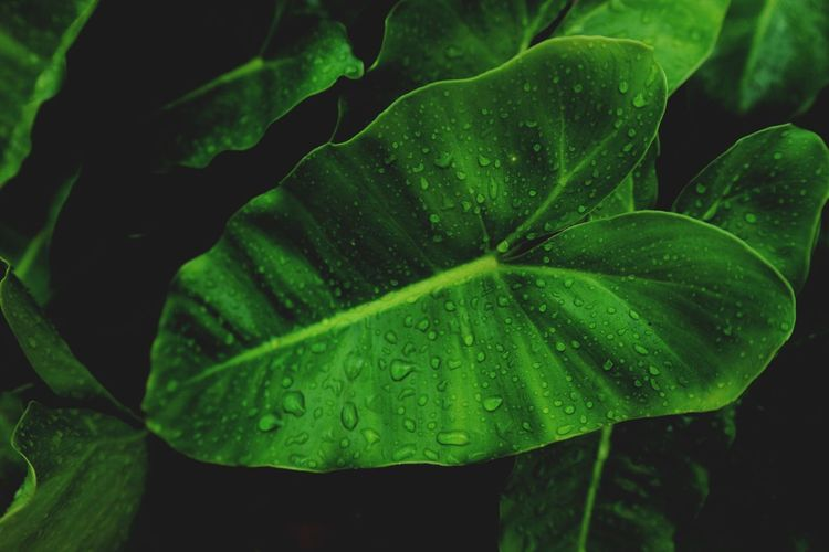 Leaf Plant Part Green Color Plant Growth Drop Beauty In Nature