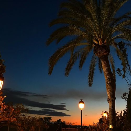 In the meantime.. romance UNESCO World Heritage Site Blessedandthankful Beautiful Energy Tranquility Mobilephotography Palm Tree Tree Illuminated Low Angle View Dusk Sky Night Beauty In Nature Sunset