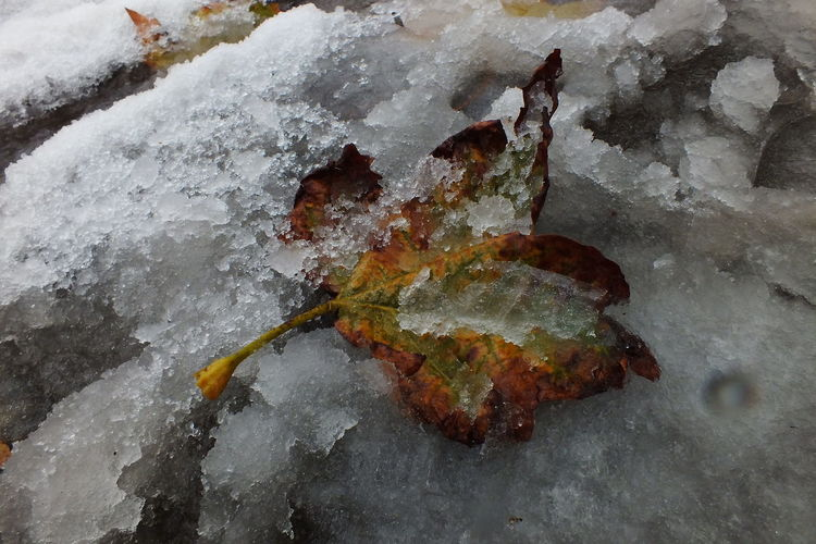 Autumn Leaf in Ice Mud Autumn Leaf Autumn Leaf On The Pathway Close-up Ice Ice Mud Ice Path Icy Pathway Leaf Muddy Wintertime Nature Outdoors Wintertime