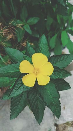 Flower Leaf Flower Head Plant Yellow Green Color Beauty In Nature Nature Fragility Close-up Growth Petal Beauty Day Outdoors No People Freshness Backgrounds Phone Background Iphone Background Tree Autumn Plant Beauty In Nature Nature