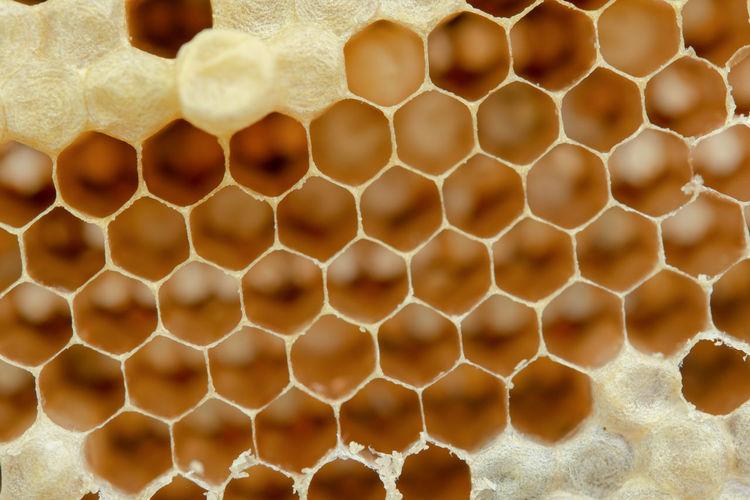 Honeycomb Honey