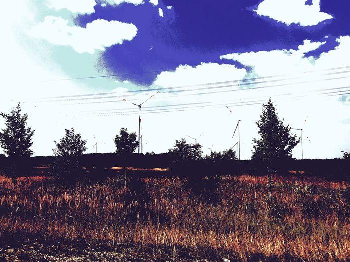 Meadow Pinwheel