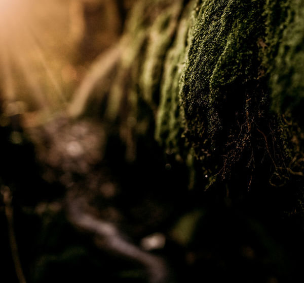 Moss and sunbeams at Somersby Falls, Brisbane Waters National Park, New South Wales, Australia Close-up Nature Growth No People Outdoors Beauty In Nature Fragility Moss Green Sunlight Softness Fineartphotography Sunbeams Sunrays Newsouthwales Australia Yellow Yellowlight Sunflare