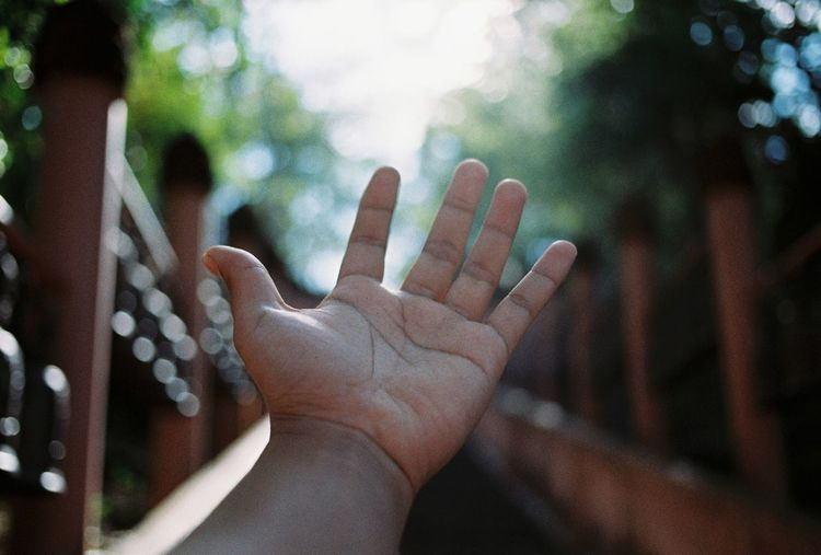 Close-up of hand against blurred trees