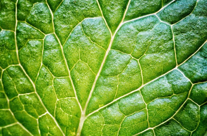 Nature's Networking Nature Leaves Green Yllimography Backgrounds Leaf Full Frame Pattern Plant Part Close-up Plant Green Color
