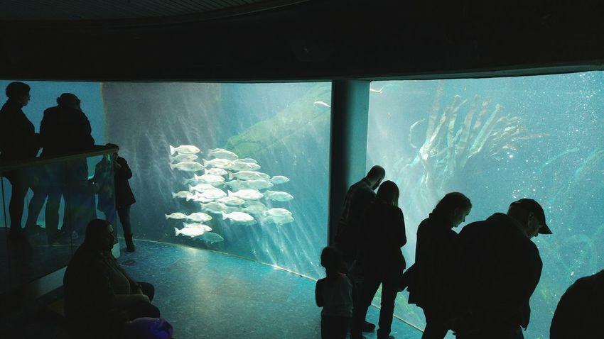 Fish Aquarium Silhouette Underwater Beauty In Nature