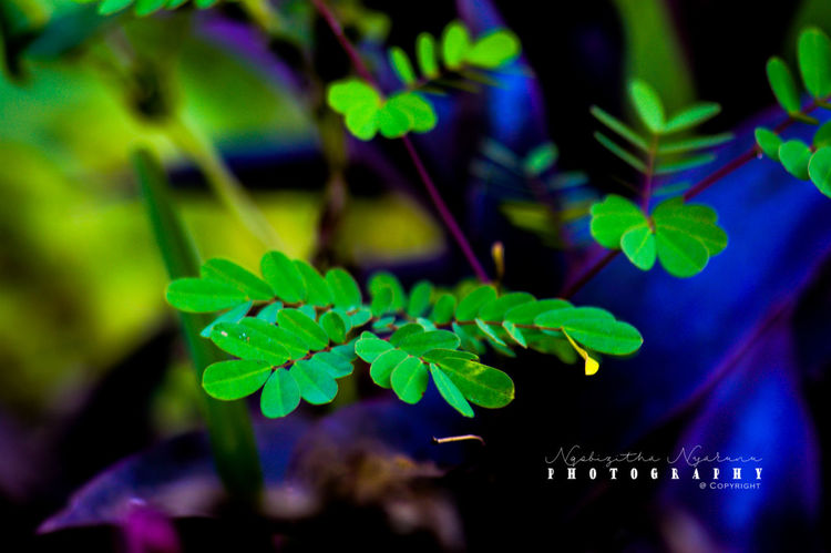 Green Color Plant Leaf Plant Part Close-up Nature Beauty In Nature Plant Stem Tranquility Growth