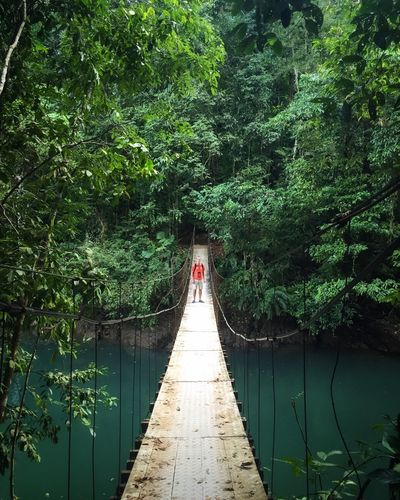 Been There. Costa Rica Osa Peninsula Hanging Bridge Rain Forest Vacations Travel Backpacker Lost In The Landscape Perspectives On Nature The Traveler - 2018 EyeEm Awards