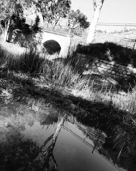 Bridge and Tree Reflections in a Puddle Blackandwhitephotography Blackandwhite Bnw Bnw_maniac Bnwlovers Monochrome Bnw_lover Bnw_lovers Mono