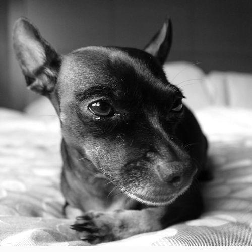 Dog Focus On
