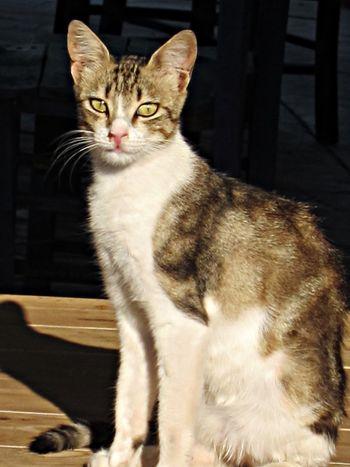 Cat at the harbour 2013 Seferihisar / Teos