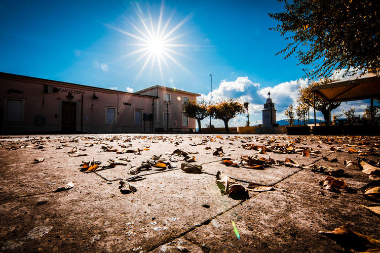 Surface level of dry leaves against buildings in city