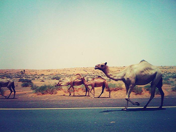 ArabStreets